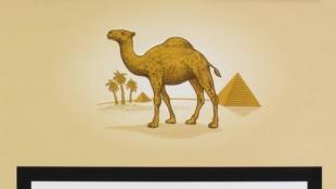 Rob Scholte - Camel