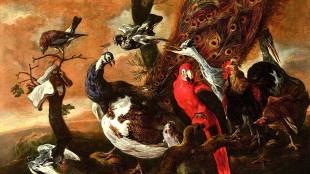 Joannes Fijt - Vogelconcert (waarbij de rode ara de maat aangeeft met zijn opgeheven poot, foto Erwin Donvil:Rockoxhuis)