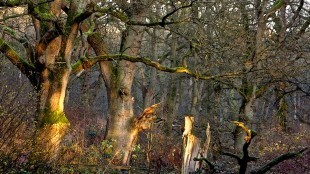 Voor mooie oude bomen kun je me altijd wakker bellen, als bomenknuffelaar met ruime armslag. Vooral eiken hebben de voorkeur, als eikel zijnde