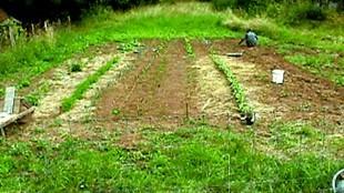 G.'s work of vegetable garden enhances ownership
