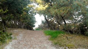 Schoorlse duinen (foto Schoolsebos moet blijven)