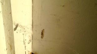 Spinnenweb op de deur (foto Lijsje Snijder)