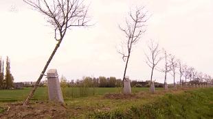 Scheef geplante bomen (foto De Telegraaf VNDG)