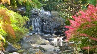 De Japanse tuin van Hortus Overzee (foto Hortus Overzee)