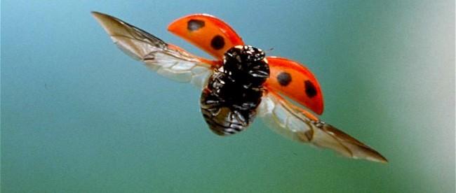Cor Hendriks De Folklore Van Het Lieveheersbeestje 16 Analyse