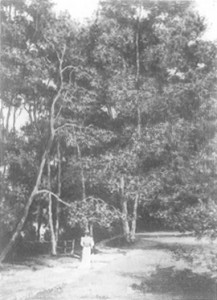 fig. 5 Girl in white walking in a forest clearing, from Georg Klusmann, Vincent van Gogh Unbekannte frühe Werke, Mainburg 1987, p 132