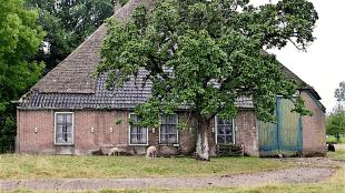 Stolpboerderij Buitenrust in Westerblokker (foto Boerderijenstichting)