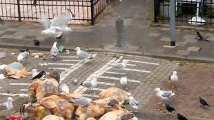 Afval beleid Den Helder (foto DHA)