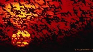 Rob Scholte - Birds